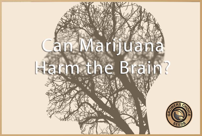 neurological dangers of cannabis